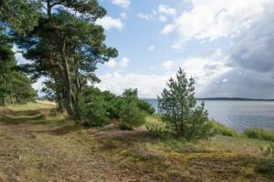Blick vom Dünenwald auf die Tromper Wiek